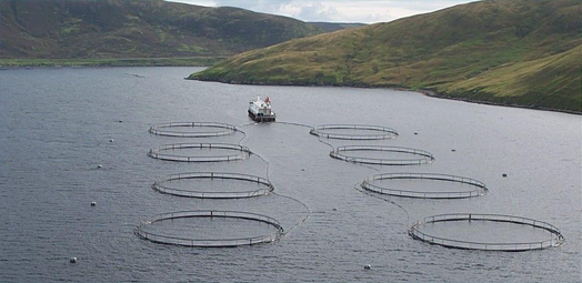 Scotland's Aquaculture