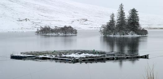 Scotland's Aquaculture | Home