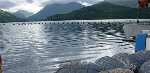 Shellfish Farming